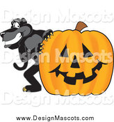 March 30th, 2014: Illustration of a Black Jaguar Mascot with a Halloween Pumpkin by Toons4Biz