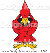 Illustration of a Red Cardinal Mascot with His Arms Crossed by Toons4Biz